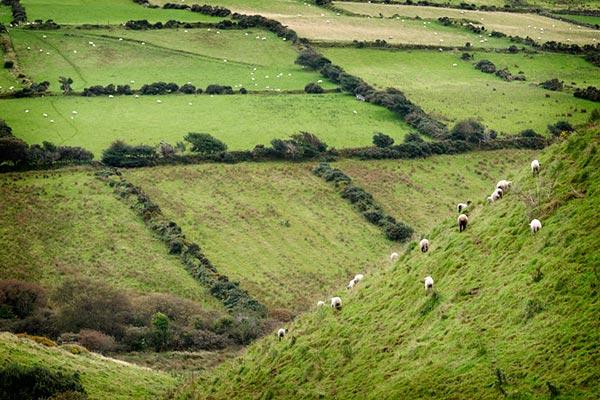alternative wedding green pastures on hill