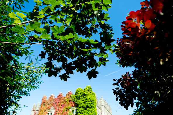 Castles and California and a spring day with colored leaves