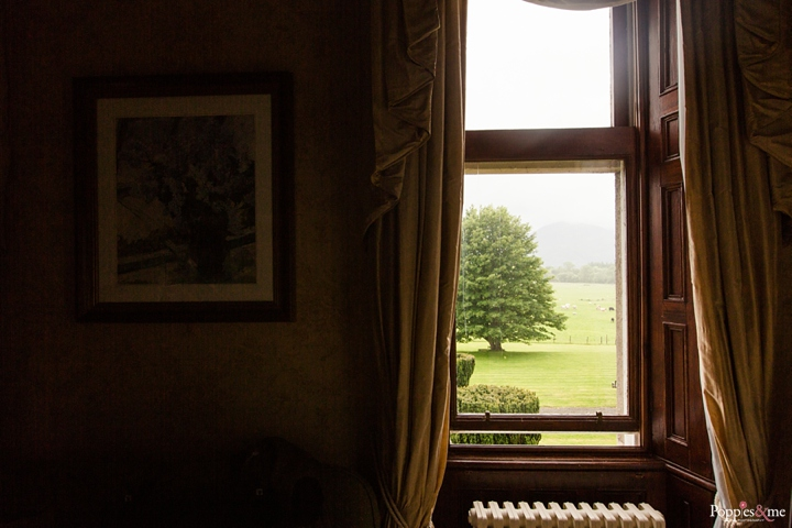 green tree as seen in a photo taken inside